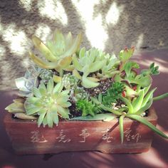 特盛りシリーズ #succulent