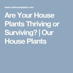 Are Your House Plants Thriving or Surviving? | Our House Plants