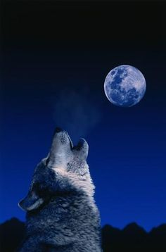Wolf Howling at the Moon : Custom Wall Decals, Wall Decal Art, and Wall Decal Murals | WallMonkeys.com