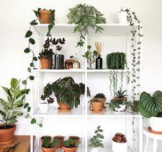 plant shelfie @plantswithben