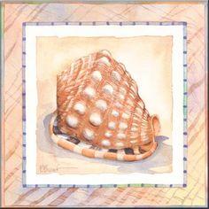 Bordered Shell Helmet - Accent Tile