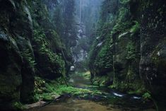 Brothers Grimm: Rocky mossy forest
