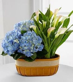 Spring Skies Hydrangea & Calla Lily Duo
