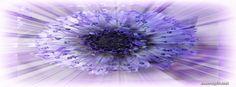 Flower - Purple Sunrise Facebook Cover