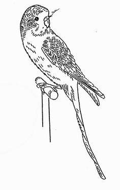 Vintage Embroidery Pattern 3372 Davy the Parakeet for Towels 1940s