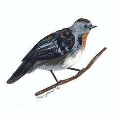 Day 28: Australian logrunner #gouache #illustration #ornithology #kelzukisanimalkingdom