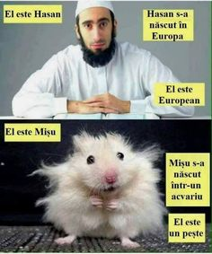 this-is-hasan-he-was-born-in-sweden-hasan-is-swedish-muslim-this-is-misho-he-was-born-in-an-aquarium-misho-is-a-fish-hamster-comparison-trolling. Reaction Pictures, Funny Pictures, Funny Pics, Pedobear, Witty Quotes, Adult Humor, The Hobbit, Good News, Troll