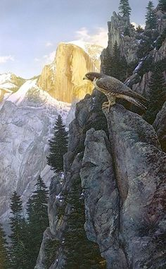 Stephen Lyman - Return of the Falcon - ANNIVERSARY EDITION CANVAS from the Greenwich Workshop Fine Art Gallery featuring fine art prints, canvases, books, porcelains and gift ideas. Yosemite National Park, National Parks, Bev Doolittle, Workshop, Yosemite Valley, John Muir, Birds Of Prey, Wildlife Art, Magazine Art