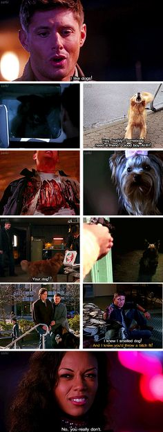 [SET OF GIFS] 8x15 Man's Best Friend with Benefits, 1x12 Faith, 3x11 Mystery Spot, 3x16 No Rest for the Wicked, 4x06 Yellow Fever, 5x16 Dark Side of the Moon, 6x01 Exile on Main Street, 6x17 My Heart Will Go On, & 8x01 We Need to Talk About Kevin