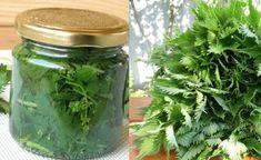 Nedělejte z nich jen čaj, toto by měl na jaře vědět každý: 11 způsobů, jak využít sílu kopřivy zcela zdarma!   iRecept.cz Herb Garden, Home And Garden, Healthy Style, Home Canning, Lemonade, Pickles, Natural Remedies, Life Is Good, Mason Jars