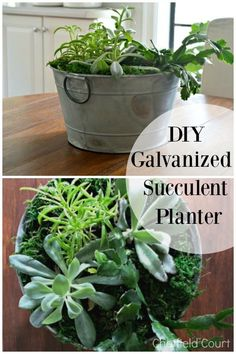 DIY Succulent Planter made with a galvanized bucket #diy #plants #succulent #planter #diyplanter #succulentplanter