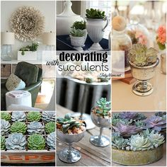 with succulents Decorating with succulents! perfect house plant for those with a black thumb and busy lives! at Decorating with succulents! perfect house plant for those with a black thumb and busy lives! Growing Succulents, Cacti And Succulents, Planting Succulents, Planting Flowers, Air Plants, Garden Plants, Indoor Plants, Succulent Gardening, Container Gardening