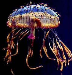 Amazing jellyfish