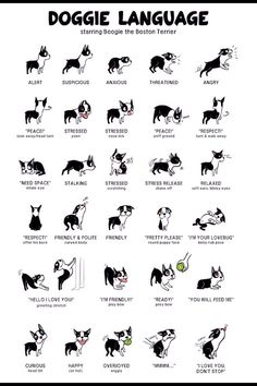 Know What Your Dogs Saying #Family #Trusper #Tip