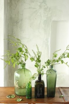 Greenery in glass bottles