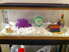 This is a good home for a Roborovski hamster; it has a water bottle, food, a house, toys, an exercise wheel, and bedding.