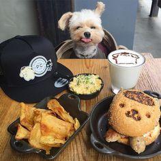 Neuer Hit auf Instagram: Kennen Sie schon Foodie-Hund Popeye? #Popeye #Food #FoodieDog
