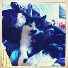 """Bonnie's Saturday morning routine… """"helping"""" us put away clean laundry…  Happy Caturday!"""