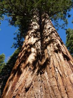 Trail of 100 Giants- Sequoia National Forest, Porterville, California