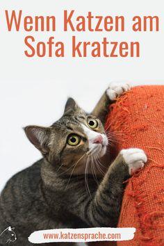 Wenn Katzen an Möbel, Polster und Tapeten kratzen, so signalisieren sie hiermit ihren Besitzanspruch. Die Katze überträgt beim Kratzen Duft-Sekrete aus den Drüsen zwischen ihren Zehenballen.