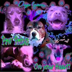 My Twitter Logo, for 3 Dog Daze Productions