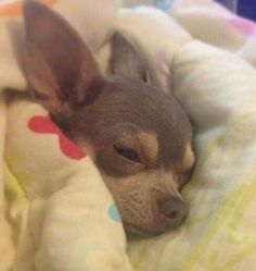 Shhhhhhh, sleeping