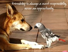 sweet true friendship quotes pictures http://www.wishesquotez.com/2016/11/sweet-friendship-quotes-and-romantic.html