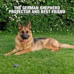 Amen! 😘 Kid loved by Patrick Scott May 🐾 #germanshepherdsquotes #quotesaboutgermanshepherds #germanshepherdquotesloyality #gsdmemes #gsdquotes #gsddog gsddoggermanshepherds #gsdfacts German Shepherd Memes, Gsd Dog, Amen, Best Friends, Facts, Kid, Signs, Country, Quotes