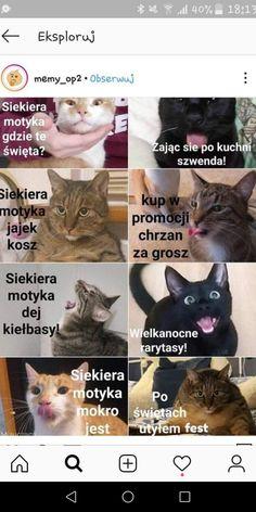 Aaaa, Kleośka i ferajna (ʘᴗʘ✿) Wtf Funny, Funny Cats, Funny Memes, Jokes, Nordic Art, Bad Puns, Happy Animals, Best Memes, Kittens Cutest
