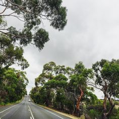 Drives like this one really make me wish I had a #Victoria license.  #RoadTrip #latergram #naturallight #NoFilter #green #rain #AireysInlet #PortCampbell #igers #Melbourne #ExploreMelbourne #nature #VisitVictoria #ExploreEverything #VisitMelbourne #igers_Vic #australiagram #australiagram_vic #Australia #wanderlust #travelgram #TravelAustralia #NeverStopExploring #travel #iPhone #Torquay #clouds by kimferns http://ift.tt/1PI0pio
