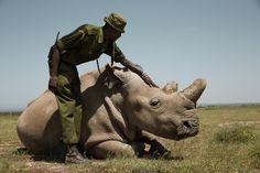 Amazing rhino pic !