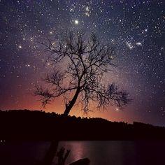 TreeStars by Esmar Abdul