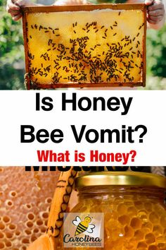 Is Honey Bee Vomit? What is honey? Is honey bee vomit or bee throw up? Understanding the process of Honey Uses, Raw Honey, Cooking With Honey, How To Start Beekeeping, Swallow Food, Honey Packaging, Backyard Beekeeping, Honey Recipes, Eating Raw