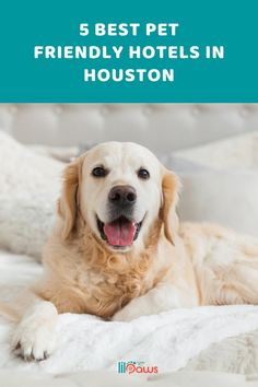 5 Best Pet Friendly Hotels in Houston, Texas. Not all hotels in the Houston area see animals as a trouble. Many open their doors to family pets as well as their traveling human buddies. Before your next stay at a Houston hotel, take a look at this checklist for the best places to bring your pet while taking a trip. #pet #travel #texas #hotel #petfriendly #pethotel #texashotel #houston #pethouston #houstontravel #pets #pettravel