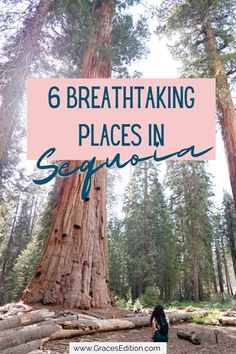 Everything you need to know about what to see in the beautiful Sequoia National Park! Get ready to see one of California's beautiful places filled with some of the tallest trees you'll see for miles. From the Tunnel Log to Moro Rock here are the top 6 things I recommend checking out next you visit Sequoia National Park. Usa Travel Guide, Travel Usa, Sequoia National Park California, Road Trip Usa, Moro Rock, California Travel, So Little Time, Travel Essentials, Weekend Getaways