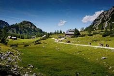 Tierischer Urlaub mit Hund auf der Tauplitzalm, im Ausseerland in der Steiermark (c) Grazerhütte #urlaubmithund #wandernmithund #hütten #alpen #wandern #steiermark - www.tierischer-urlaub.com