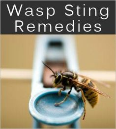 Source.tinput.com  Wasp Stings: Treatments & Home Remedies   Before trying a remedy, check to see if the stinger remained in the skin. You can remove it by scraping it out (to prevent releasing more venom) before treating. Items From The Kitchen That Soothe: Ice: Place an ice cube or ice pack on it and press for about 20 minutes, will help reduce pain. Ice can also be used to help reduce the swelling that will occur. Make sure to protect the skin by covering ice with a thin cotton towel or…