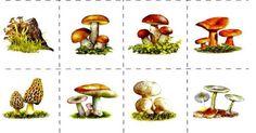Отличите ли вы съедобный гриб от ядовитого?