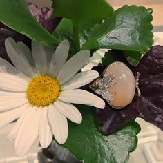 Remind her that she still gives you the butterflies with this stunning diamond halo moonstone ring with beautiful diamond pave butterflies! #love #burdeensjewelry #jewelry #diamonds #moonstone #diamondrings #rings #fashion #bling #stones #chicago #buffalogrove #thebillionairesclub #thegoodlife #luxurylife #style #hautejewels #instajewelry #forsale #millionaire_lifestyle #beauty #statement #beautiful #love #jewelrygram
