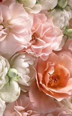Creamy Pink and Peach Roses and Peonies Pink Flowers, Beautiful Flowers, Pink Roses, Romantic Flowers, Pastel Flowers, Hello Beautiful, Tea Roses, Summer Flowers, Cut Flowers