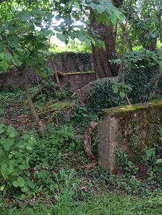 Überwucherte Ruinen der Ehrentribüne Bückeberg Reichserntedankfest Hagenohsen