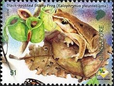 Singapore, Nepenthes ampullaria and Black-spotted Sticky Frog Carnivorous Plants, Reptiles And Amphibians, Black Spot, Fauna, Stamp Collecting, Postage Stamps, Amazing Art, Poster, Wildlife