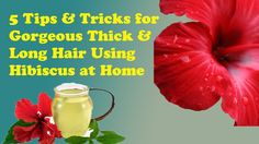 5 Tips & Tricks for Gorgeous Thick & Long Hair Using Hibiscus at Home