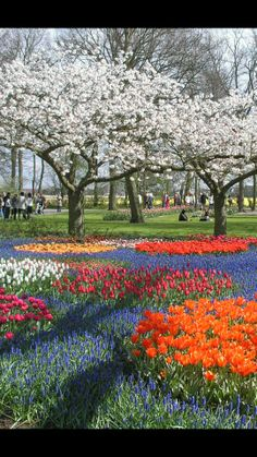 beautiful flower garden in the Holland Most Beautiful Gardens, Beautiful Flowers Garden, Beautiful Places, Amazing Gardens, Netherlands Tourism, Haarlem Netherlands, Landscape Photography, Nature Photography, Photography Poses