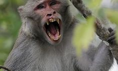 #Florida wants to remove virus-excreting wild monkeys - Daily Mail: Florida wants to remove virus-excreting wild monkeys Daily Mail ON THE…