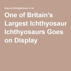 One of Britain's Largest Ichthyosaurs Goes on Display