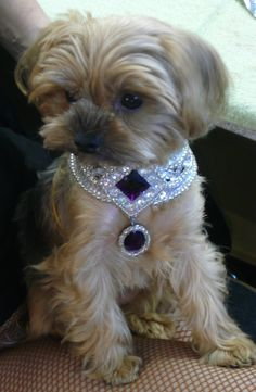 I will be making sure my pups are decked out in jewels after seeing this! Especially Lily!