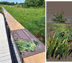 The Longwood Meadow - Natalya Zahn / Illustrator Park Signage, Wayfinding Signage, Signage Design, Lanscape Design, Navigation Design, Wetland Park, Path Ideas, Outdoor Signs, Nature Center