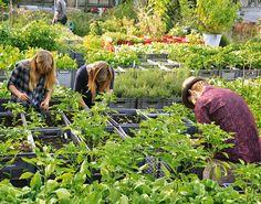Guía rapida para empezar a cultivar tu huerto urbano