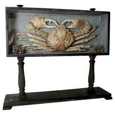 Rare Marine Natural Specimen: A Big Crab.  A VERY Big Crab.  Run for your life!